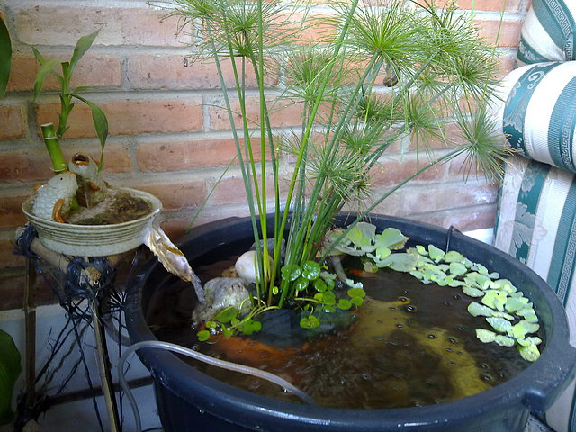 Ver tema empezando con mi estanque de for Plantas para estanques de peces