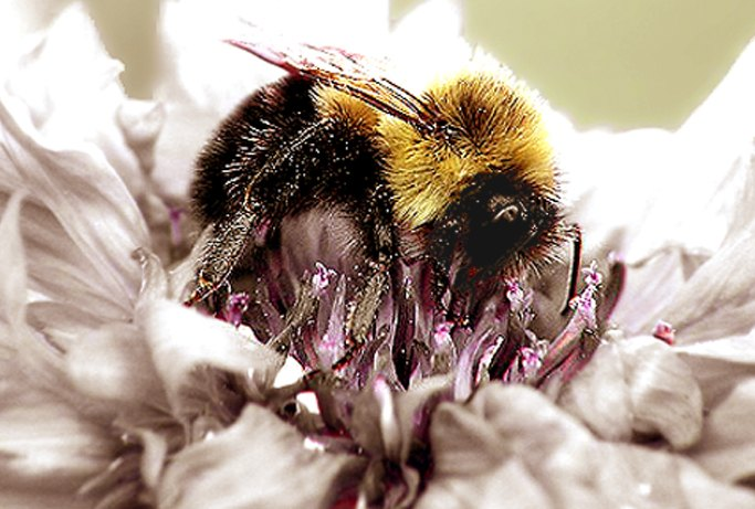 flower pollination picture