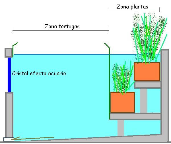 Ver tema mi primer estanque de tortugas for Plantas para estanques de peces