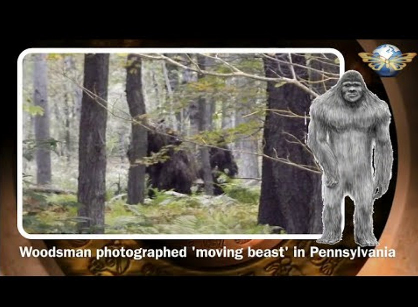 Bigfoot: Mistero Foto Boschi della Pennsylvania [VIDEO].